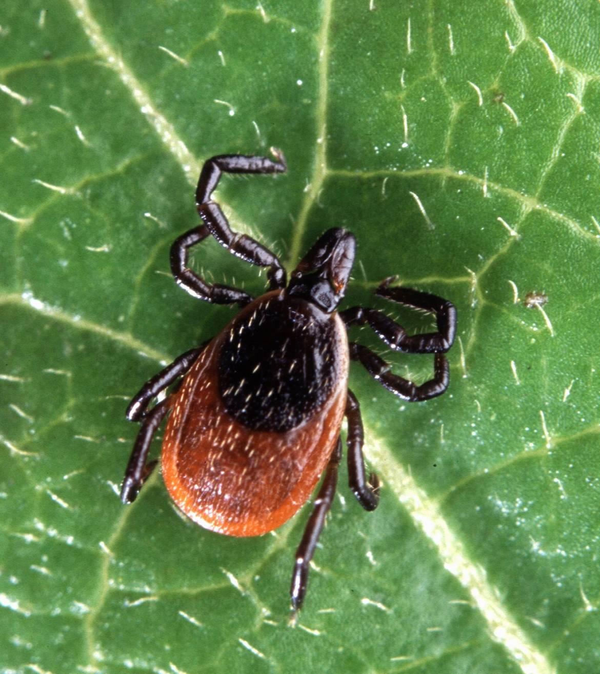 Lyme Disease Persisters – Borrelia